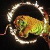 Цирки в Березнике